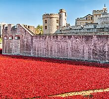 Poppies At The Tower by Graham Prentice