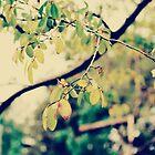 autumn leaves 1 by Dorothea Baker