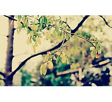 autumn leaves 1 Photographic Print