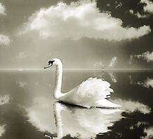 A cloud, a swan and a lake by Mal Bray