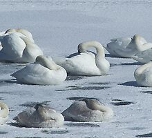 Sleeping On The Ice   #3060 by JL Woody Wooden