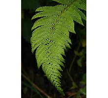 irish fern!! almost 3D Photographic Print