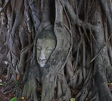 Trapped in Roots by Indrani Ghose