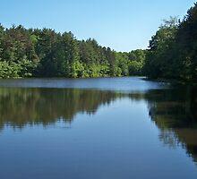 Pickeral Pond by Dandelion Dilluvio