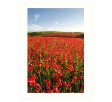 Poppies 001 Art Print
