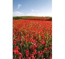 Poppies 001 Photographic Print