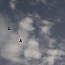 fly high by sravani