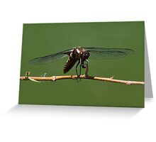 Zootz the Dragonfly tootin' his horn Greeting Card