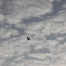 high above the sky by sravani