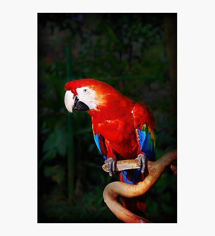 Birdie Num...Num... Photographic Print