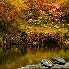 Turtles Basking in the Autumn Sunshine by Diane Schuster