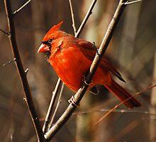 Crimson King by Lois  Bryan