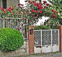 Red roses by rasim1