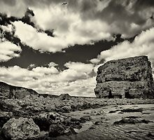 A bird will fly while a rock will dream by clickinhistory