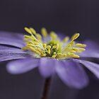 Anemone by OpalFire