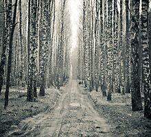 Birch forest by seawhisper