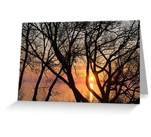 Sunrise Through the Chaos of Tree Branches Greeting Card