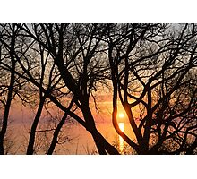 Sunrise Through the Chaos of Tree Branches Photographic Print