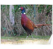 The pheasant Poster