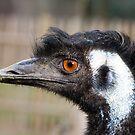 Emu by Alan Gillam