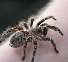 It's Getting Closer And Closer To My Face - Arachnophobia! by Sandra Cockayne