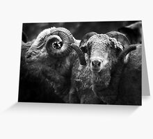 Bob's Rams B&W Greeting Card