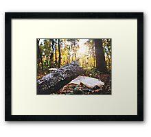 Forrest Perspective  Framed Print