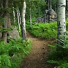 A Tranquil Path by Sue  Cullumber