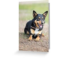 Missy... Young Kelpie....looking on... Greeting Card