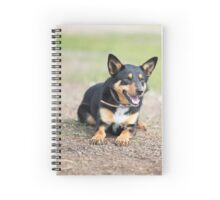 Missy... Young Kelpie....looking on... Spiral Notebook