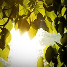 Leaves in the Sun by Katerina Down