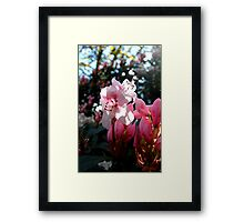 Blossoms Of Delicate Pink Framed Print