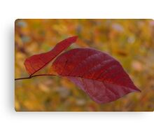 The Warm Glow of Fall - a Horizontal View Canvas Print