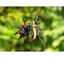 Christmas Spider's spidey soup dinner Photographic Print
