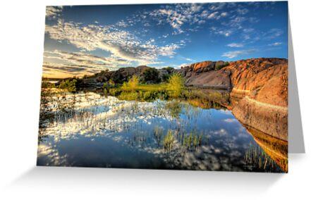 Willow Cove by Bob Larson