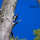 The Woodpecker by gernerttl