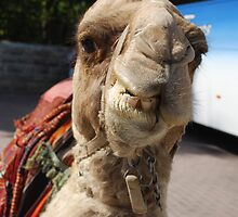 Mikey the Sassy Camel... by Carol Clifford