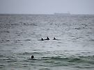 Surfing Dolphins @ Newcastle by KazM