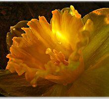 ~ Daffodil ~ by Brenda Boisvert