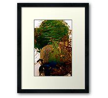 peacock dos Framed Print
