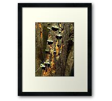 Steps of nature...... far from oil spills Framed Print