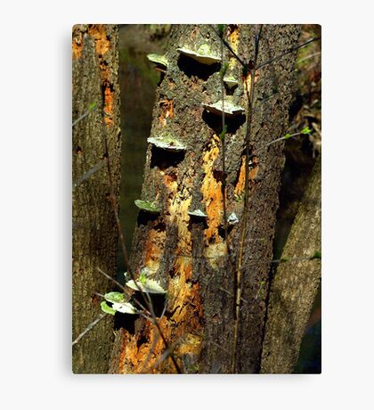 Steps of nature...... far from oil spills Canvas Print