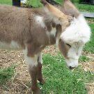Baby Donkey by AlexKokas