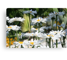 A Garden of White Daisy Flowers Canvas Print