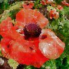 Poppy by JHRphotoART