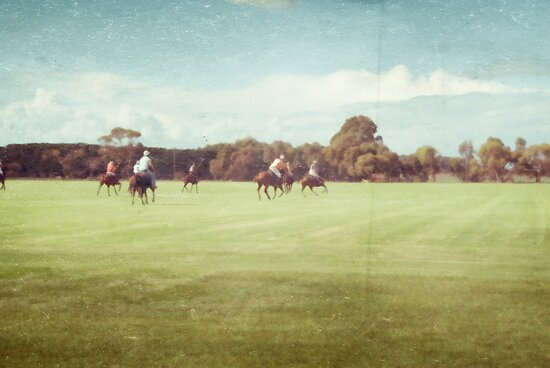 Polo Practice #2 by Tracy Edgar