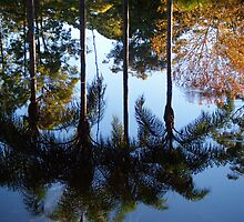 Late Afternoon Reflections. by Gabrielle  Hope