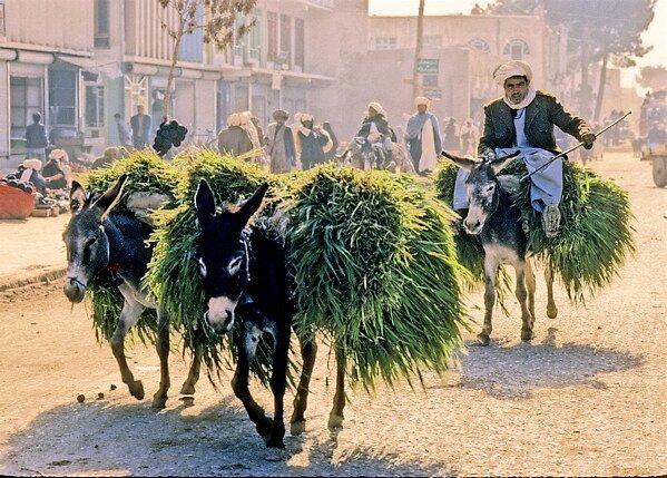 Is  precious donkey rides(3) 、AFGHANISTAN by yoshiaki nagashima