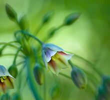 Summer bells by Jacky Parker