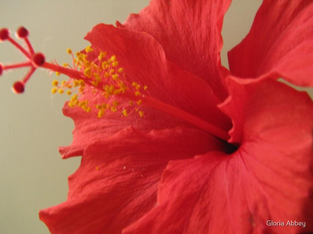 Hibiscus set by Gloria Abbey